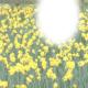 Daffodil momento card