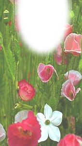 Pink Flowers Bookmark